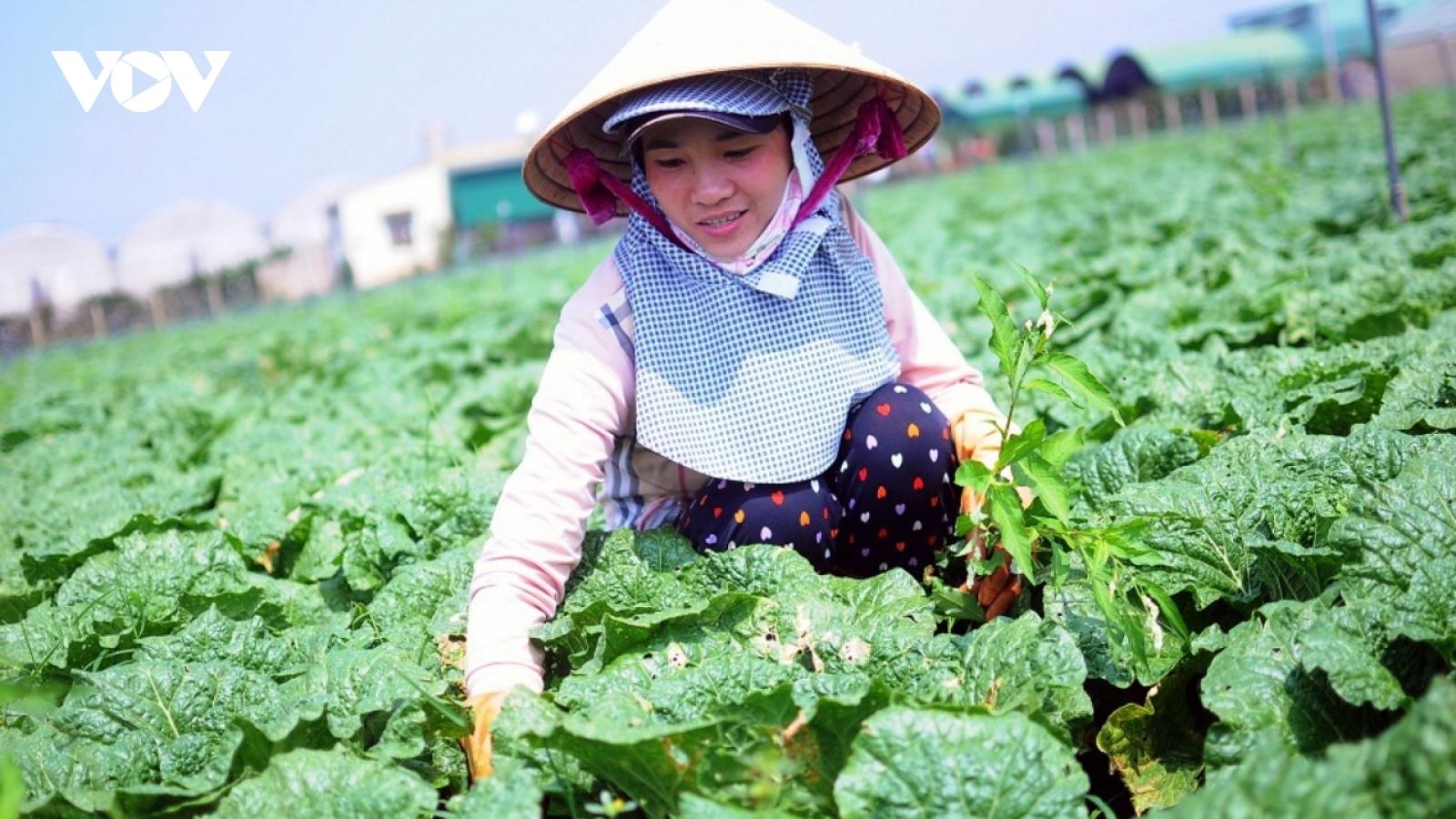 """Lâm Đồng dần khắc phục được tình trạng """"được mùa mất giá"""""""