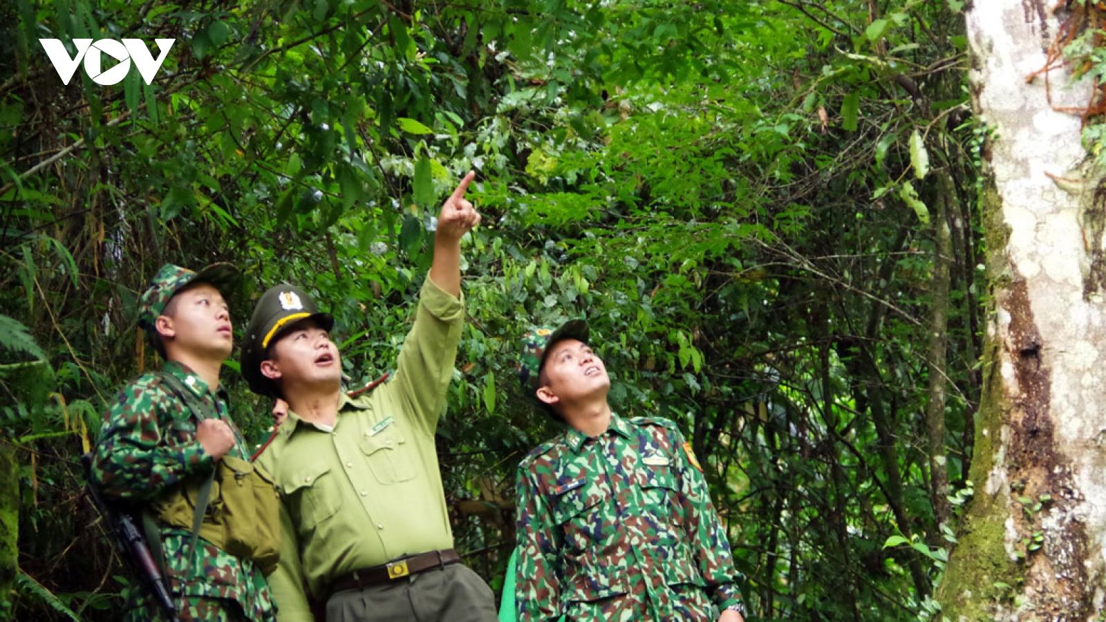 Người dân vùng cao Lai Châu no ấm từ rừng