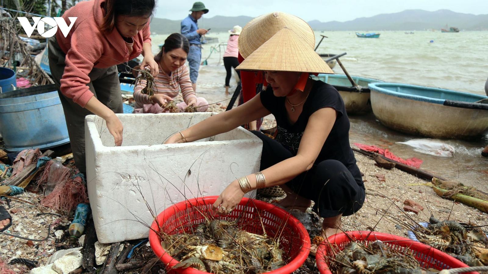 Tôm hùm chết hàng loạt ở Phú Yên, chính quyền nhận một phần trách nhiệm
