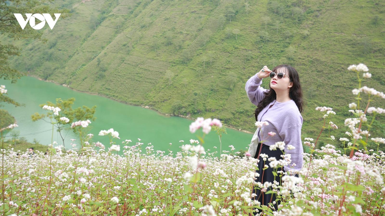 Giới trẻ đổ về Hà Giang ngắm hoa tam giác mạch bung nở