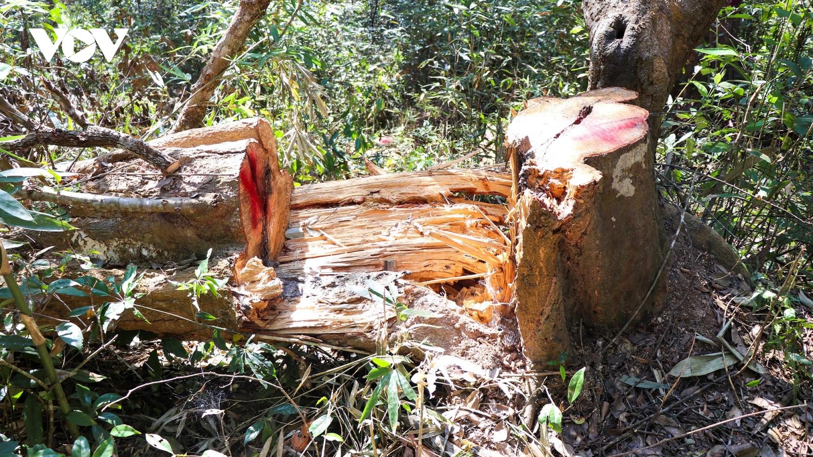 """Vùng lõi rừng đặc dụng Mường Phăng đang bị """"rút ruột"""" nghiêm trọng"""