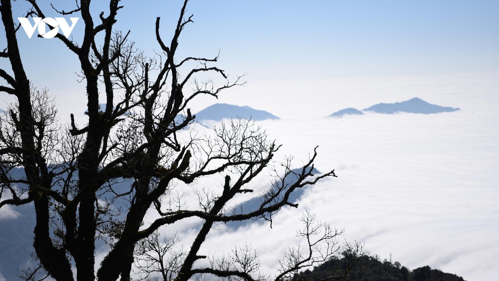 Chinh phục đỉnh Chiêu Lầu Thi 2402m bồng bềnh giữa biển mây