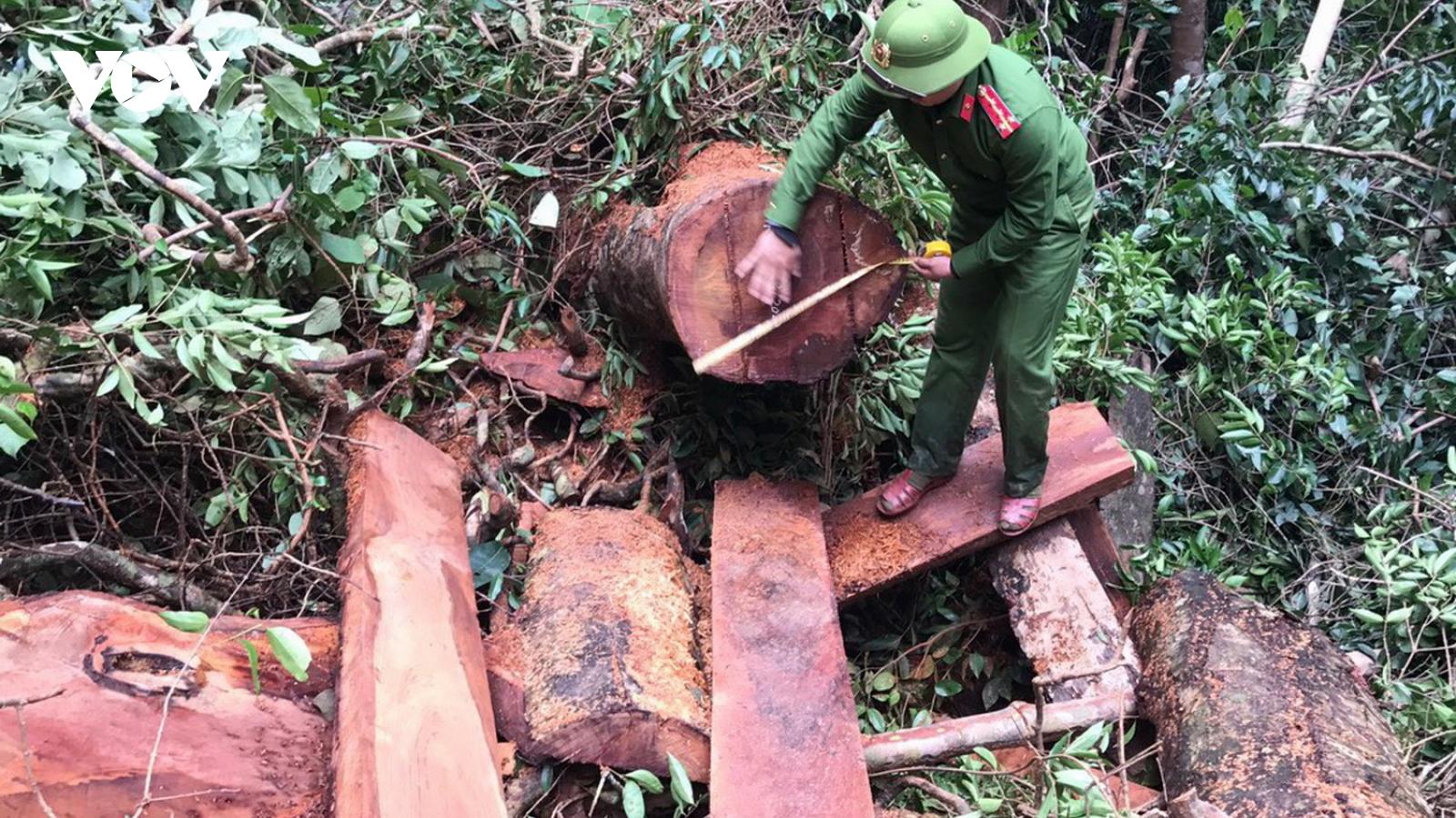 Tạm giữ hình sự 5 đối tượng liên quan đến vụ phá rừng quy mô lớn ở Quảng Bình