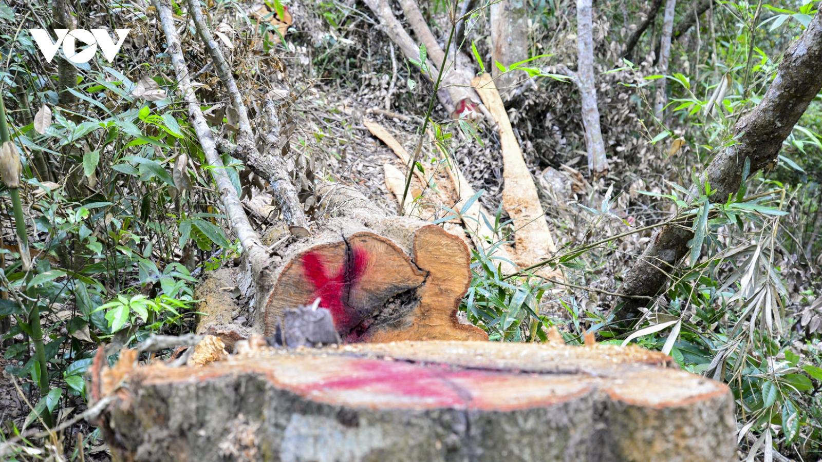Chỉ đạo làm rõ phản ánh của báo chí về việc phá rừng đặc dụng Mường Phăng