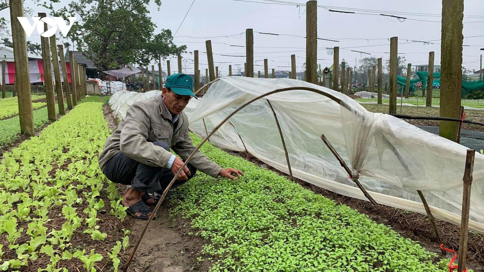 Xanh lại những vườn rau, luống cànơi vùng lũ Thừa Thiên-Huế