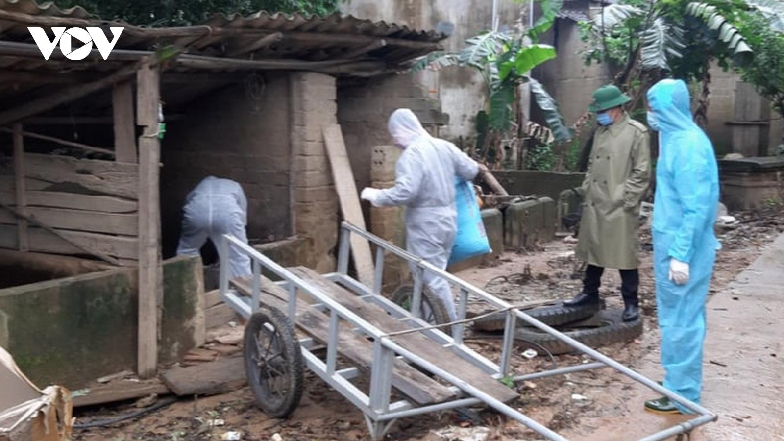 Tái bùng phát dịch tả lợn châu Phi ở Quảng Bình, lập chốt kiểm soát trên QL1A