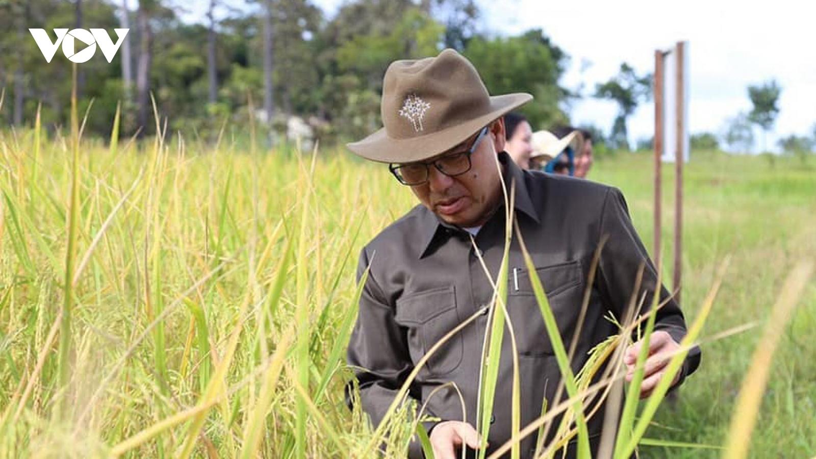 Campuchia xuất khẩu gạo tăng mạnh trong năm 2020