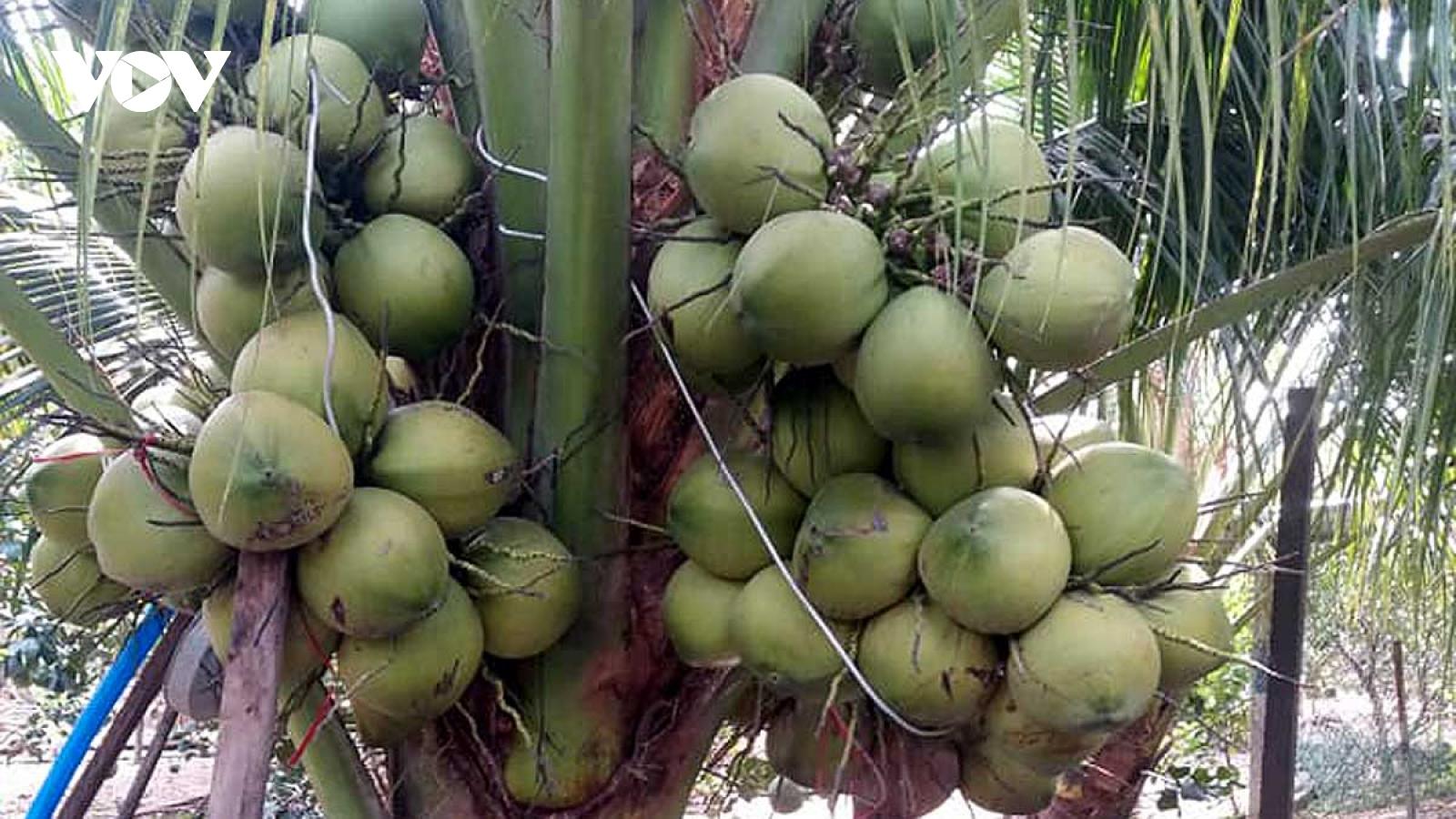 """Nhà vườn Tiền Giang """"méo mặt"""" vì nhiều loại trái cây rớt giá"""