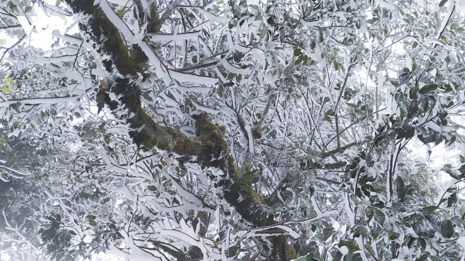 Rét đậm khiến băng tuyết xuất hiện tại ngã ba biên giới A Pa Chải