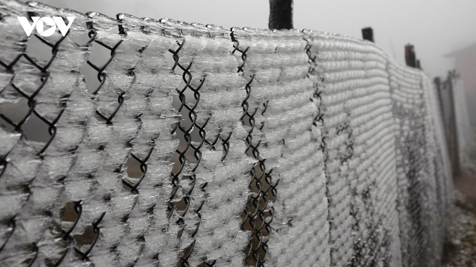 Các huyện vùng cao Yên Bái ứng phó với băng giá, rét hại