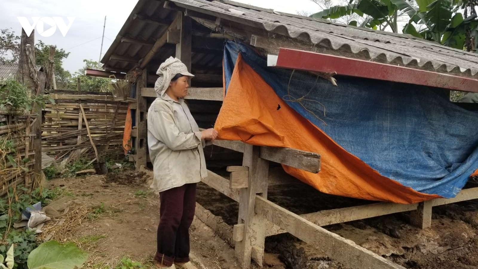 Đã có trâu bò bị chết do giá rét ở Cao Bằng