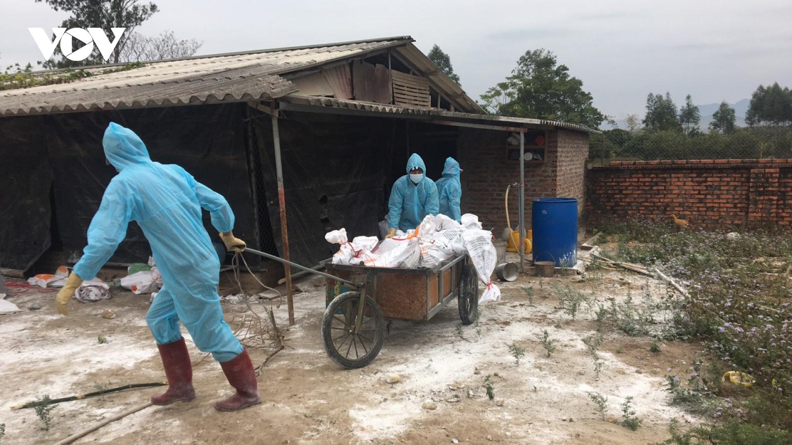 Quảng Ninh xuất hiện ổ dịch cúm gia cầm H5N6