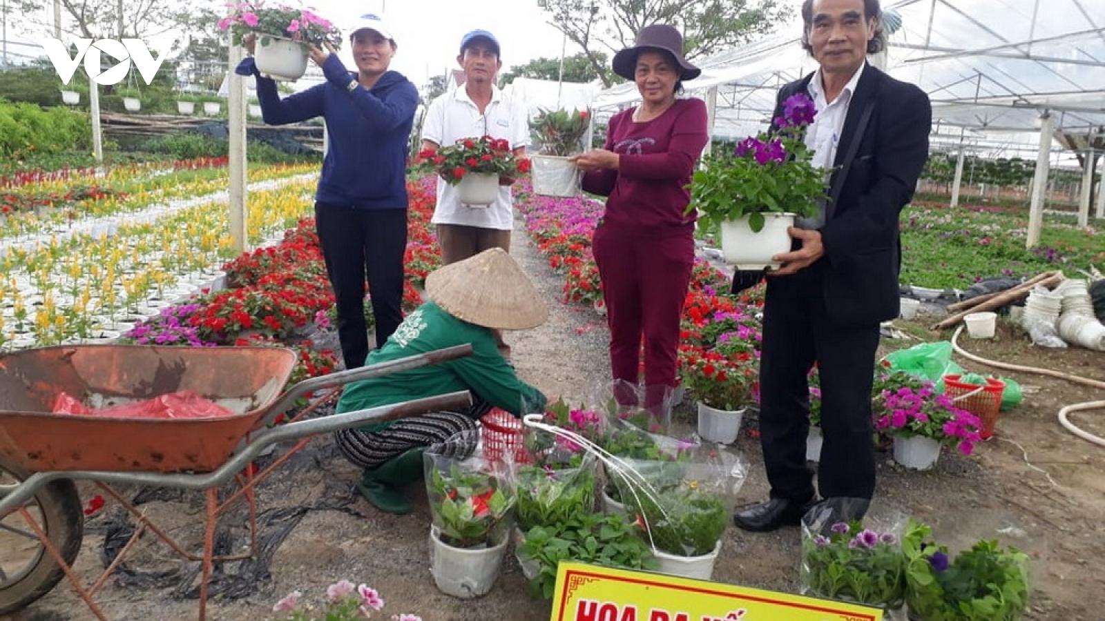 Người trồng hoa Tết ở Duy Xuyên vui vì được mùa, được giá