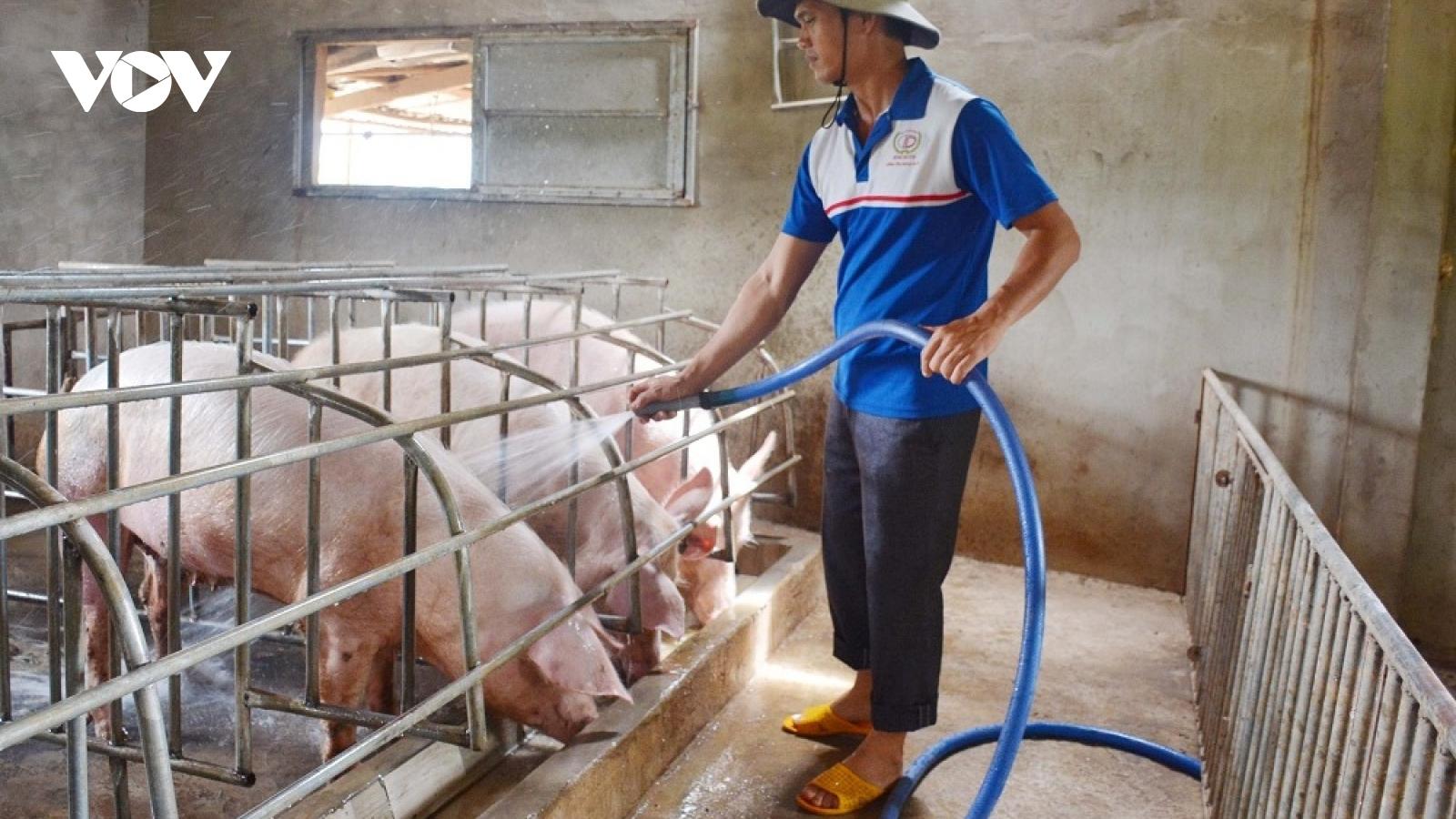 Nghệ An đảm bảo thịt lợn cung cấp thị trường Tết Nguyên đán