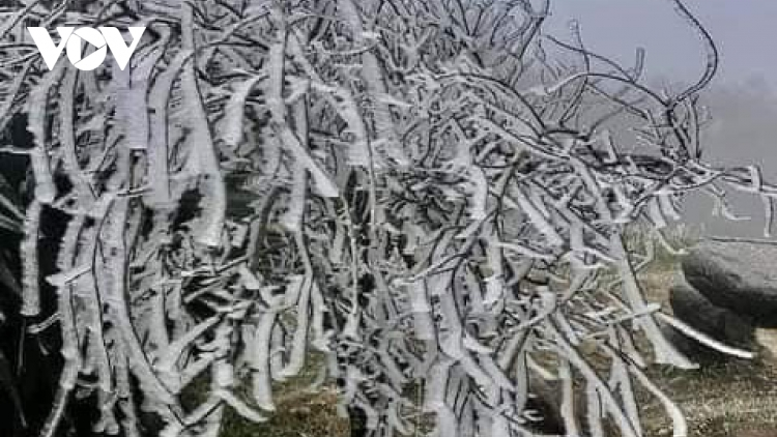 Nhiệt độ âm 1 độ C, vùng núi cao Bắc Yên, Sơn La xuất hiện băng giá