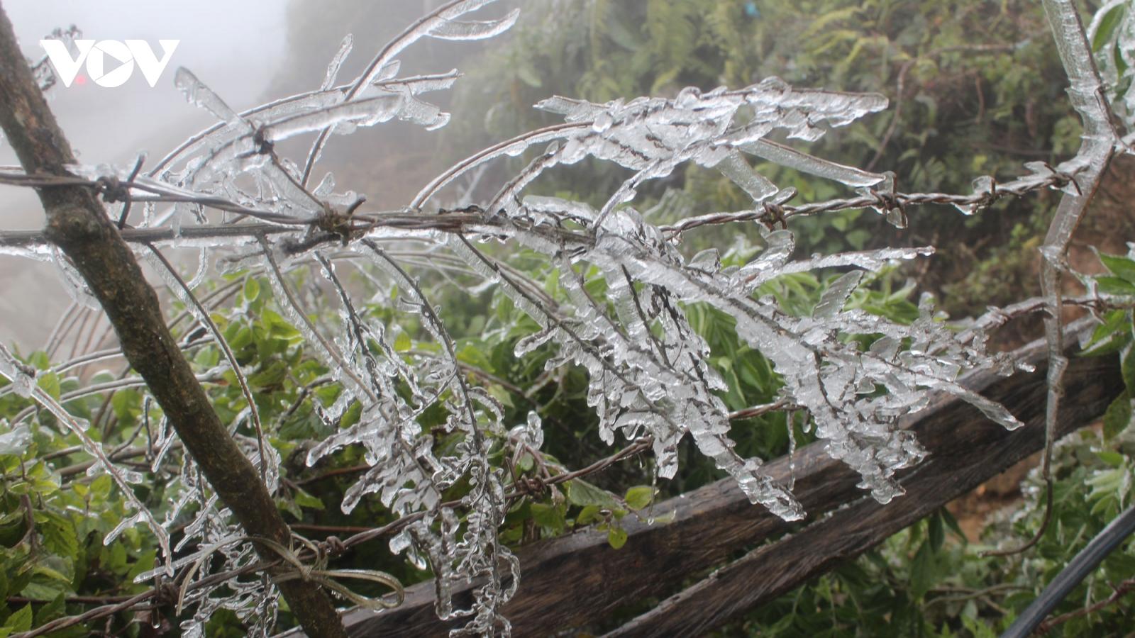 Vùng núi cao có khả năng băng giá, mưa tuyết vào ngày mai 17/1