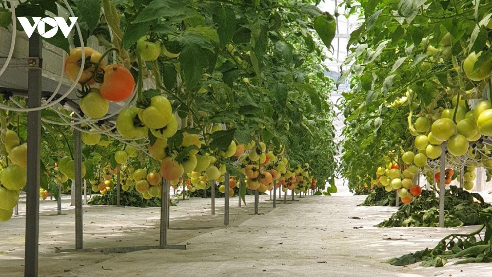 Gỡ khó nông nghiệp đô thị ở TPHCM