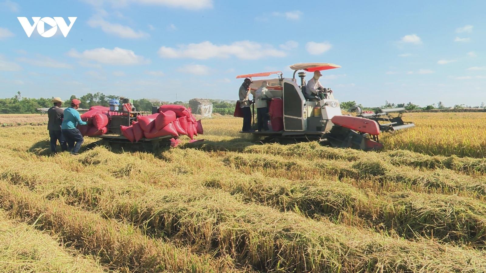 Gieo sạ sớm né mặn vụ lúa Đông Xuân sớm trúng mùa được giá
