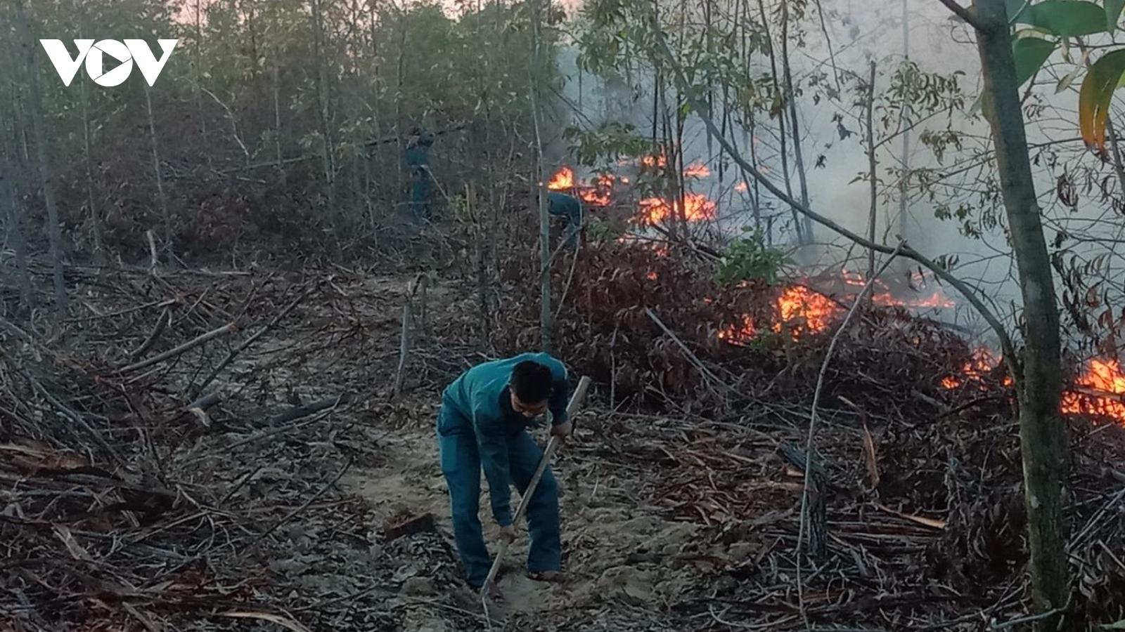 Hơn 100 người dập tắt đám cháy rừng trồng ven biển Quảng Nam