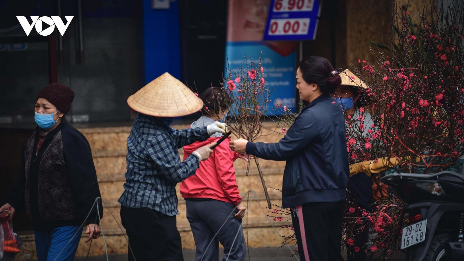 Hoa đào tươi thắm mang xuân về phố phường Hà Nội bất chấp Covid-19