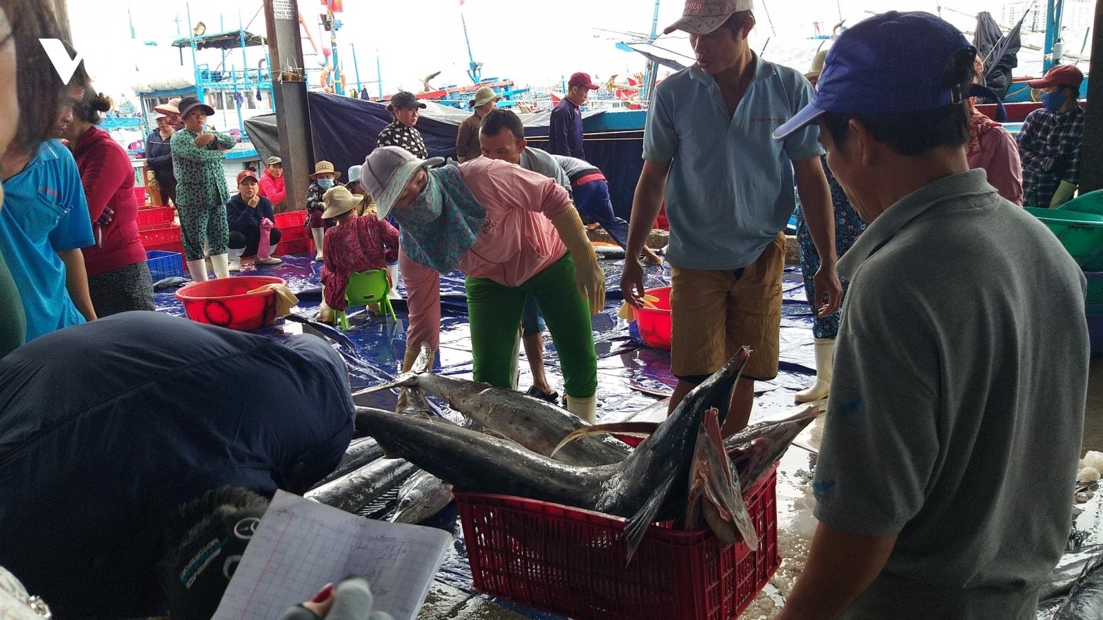 Ngư dân Nam Trung bộ đánh bắt xuyên Tết được mùa cá