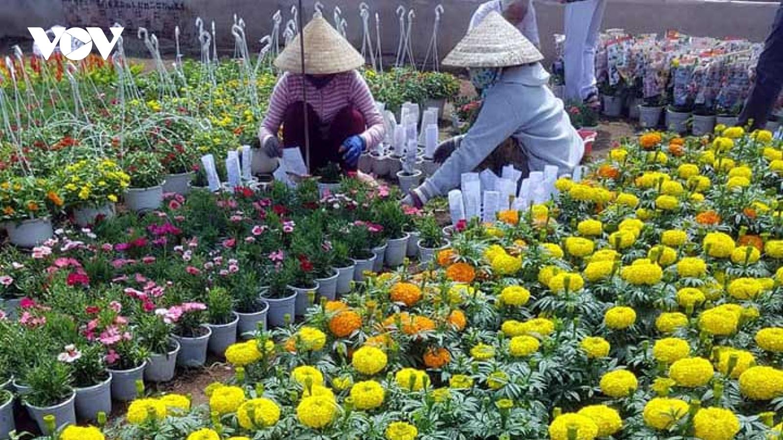 Người trồng hoa Bến Tre thu nhập tiền tỷ dịp Tết