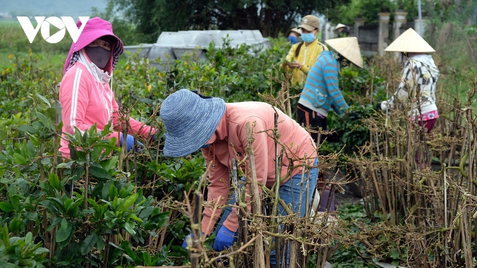 """Để nông nghiệp Việt Nam thoát """"manh chiếu hẹp"""""""