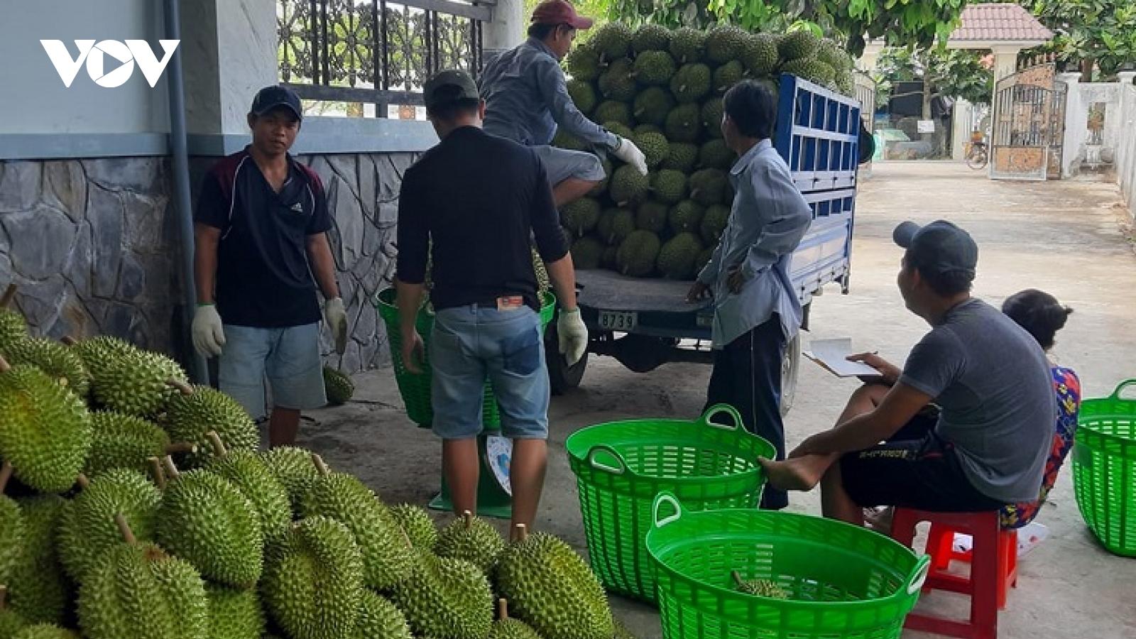 Vui tết tại các nhà vườn tỷ phú sầu riêng ở Tiền Giang