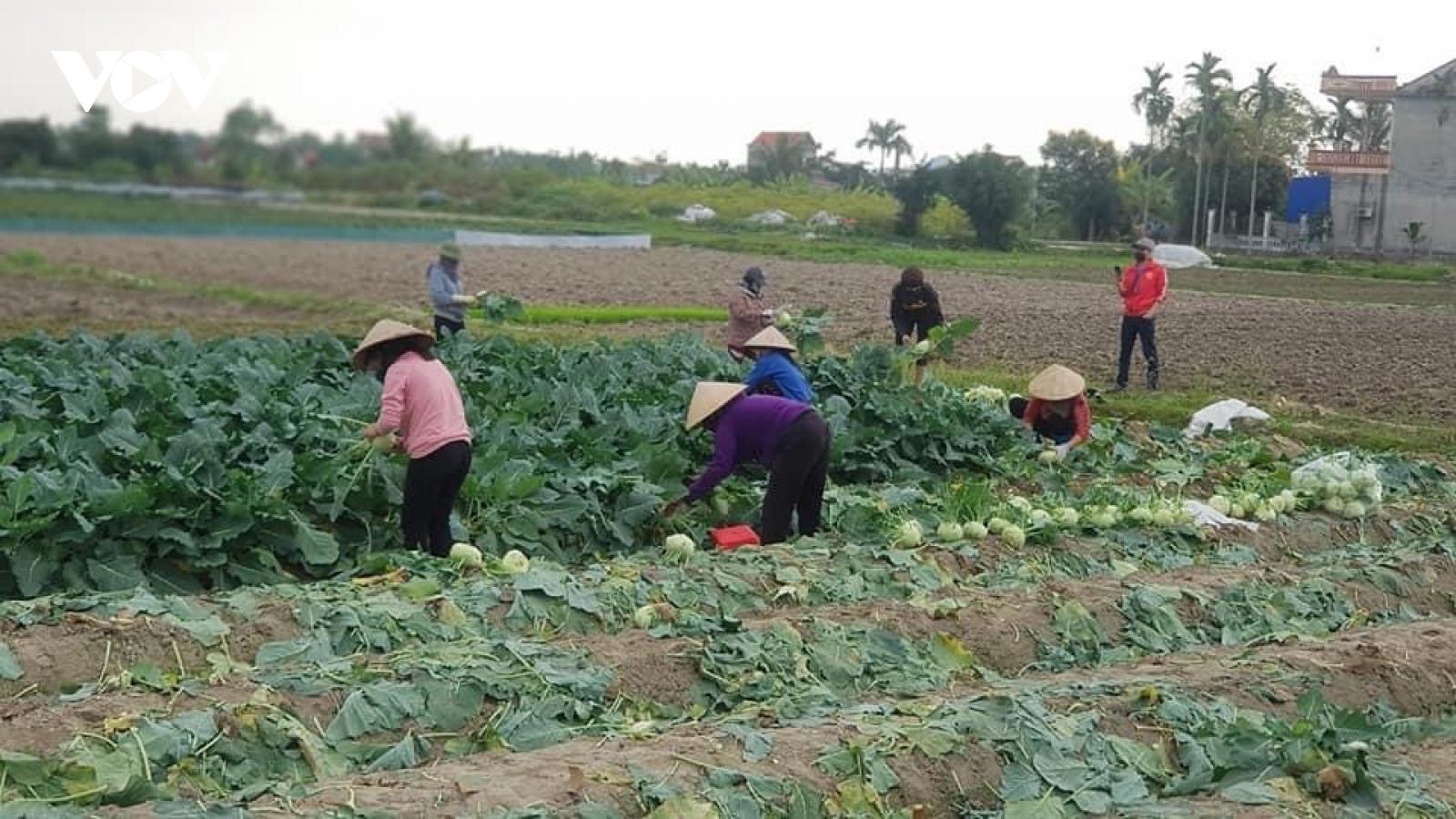 Tiêu thụ nông sản cho nông dân vùng dịch: Không phải chỉ bằng tình thương, giải cứu