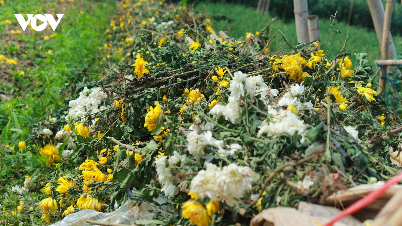 Làng hoa Tây Tựu ảm đạm dịp rằm tháng Giêng