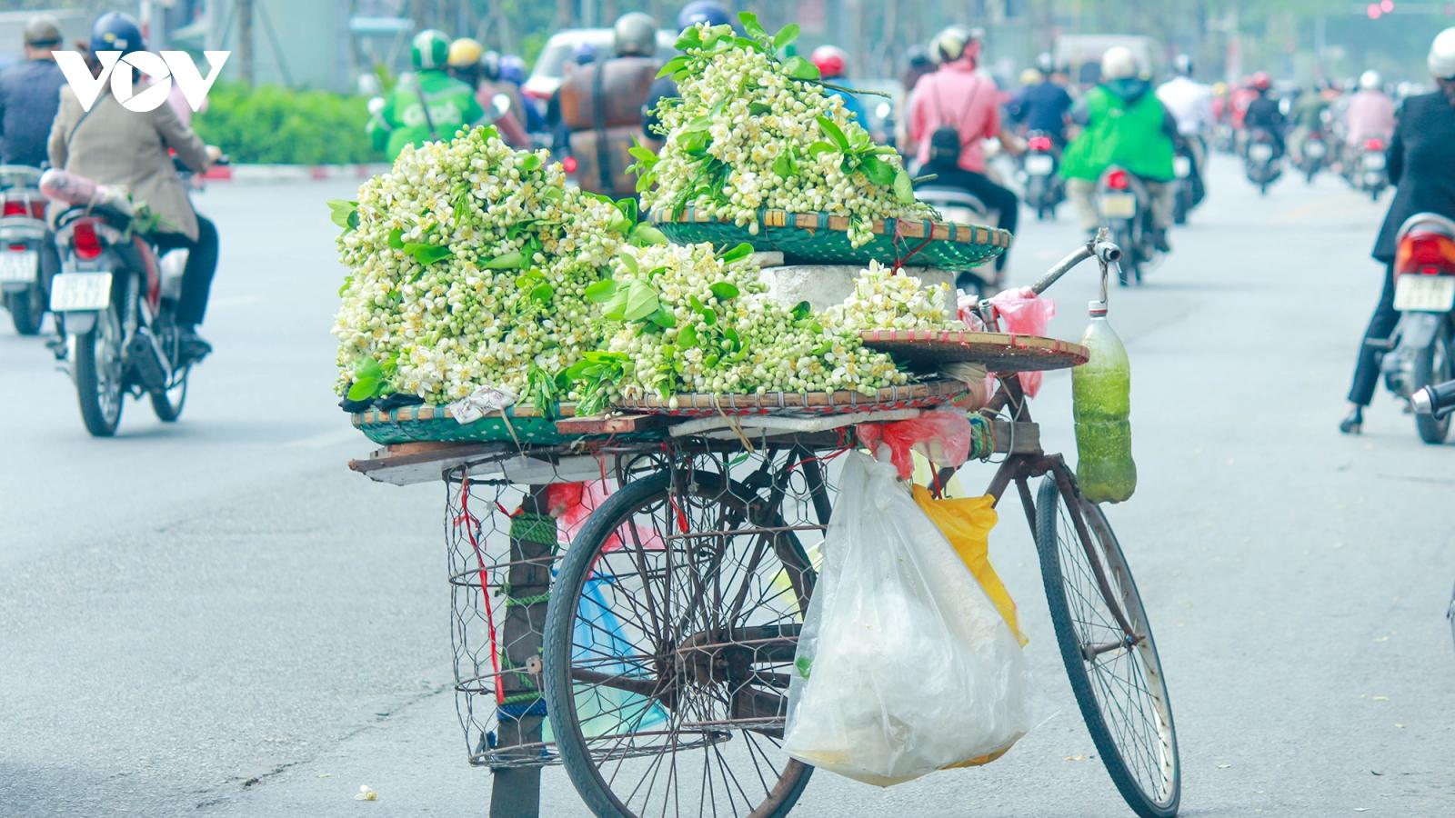 Có một Hà Nội ngát thơm mùa hoa bưởi