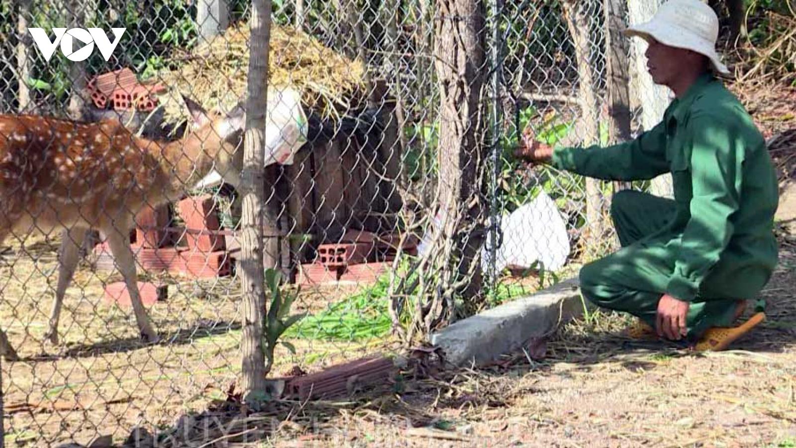 Hiệu quả từ mô hình nuôi hươu sao ở huyện Mang Yang, Gia Lai