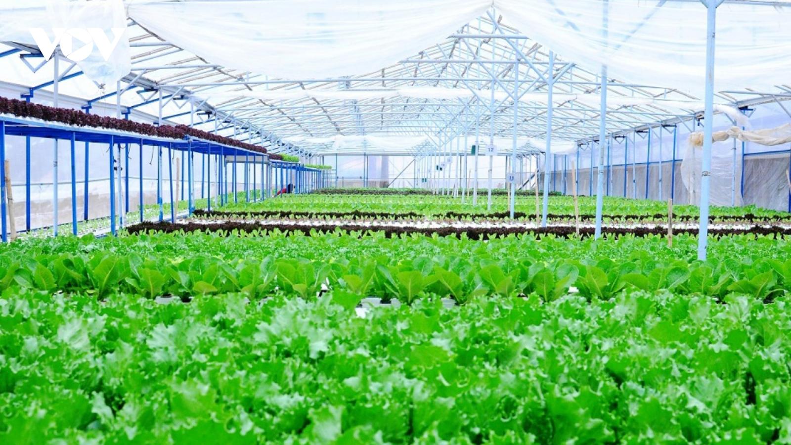 Đầu tư 260 tỷ đồng phát triển nông nghiệp hữu cơ