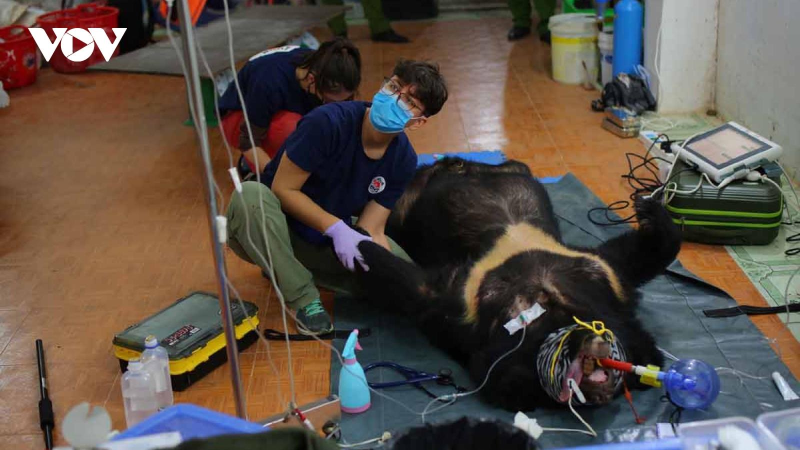 Giải cứu 2 cá thể gấu ngựa ở Sơn La