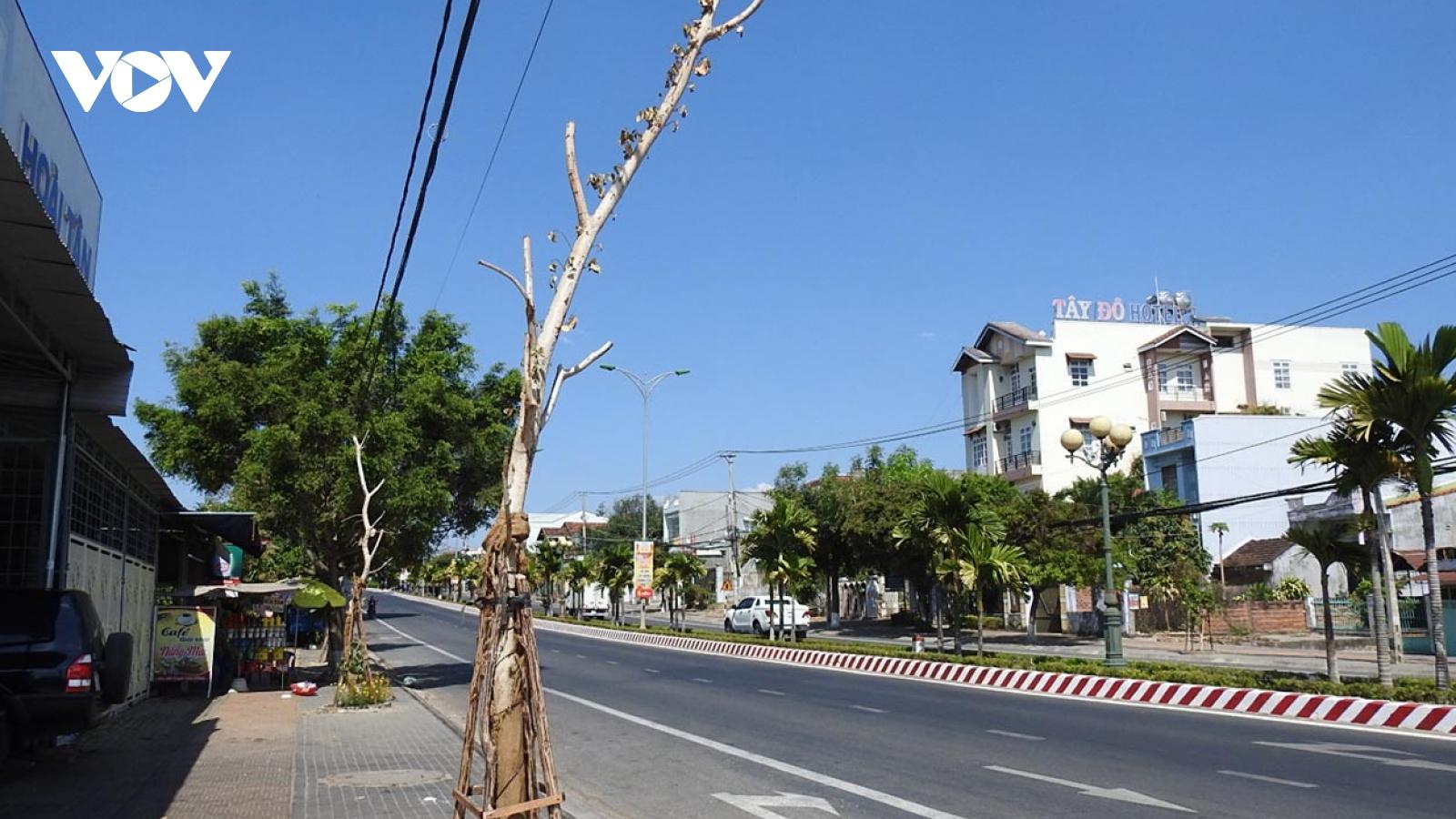 Hàng loạt cây trong đề án cải tạo cây xanh đường phố tại Kon Tum bị chết