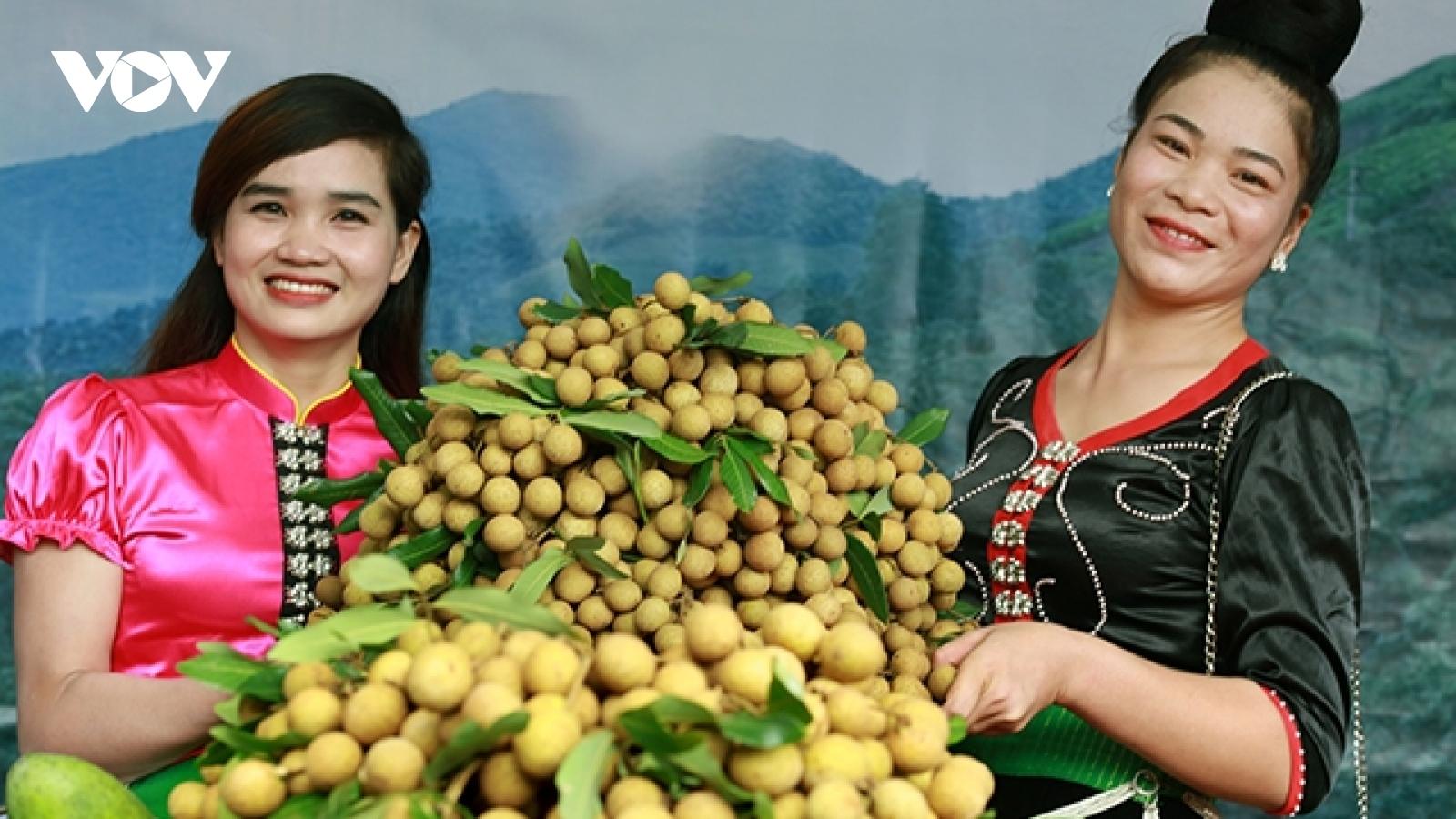 Nông dân Sơn La thu hàng trăm triệu mỗi hecta cây ăn quả