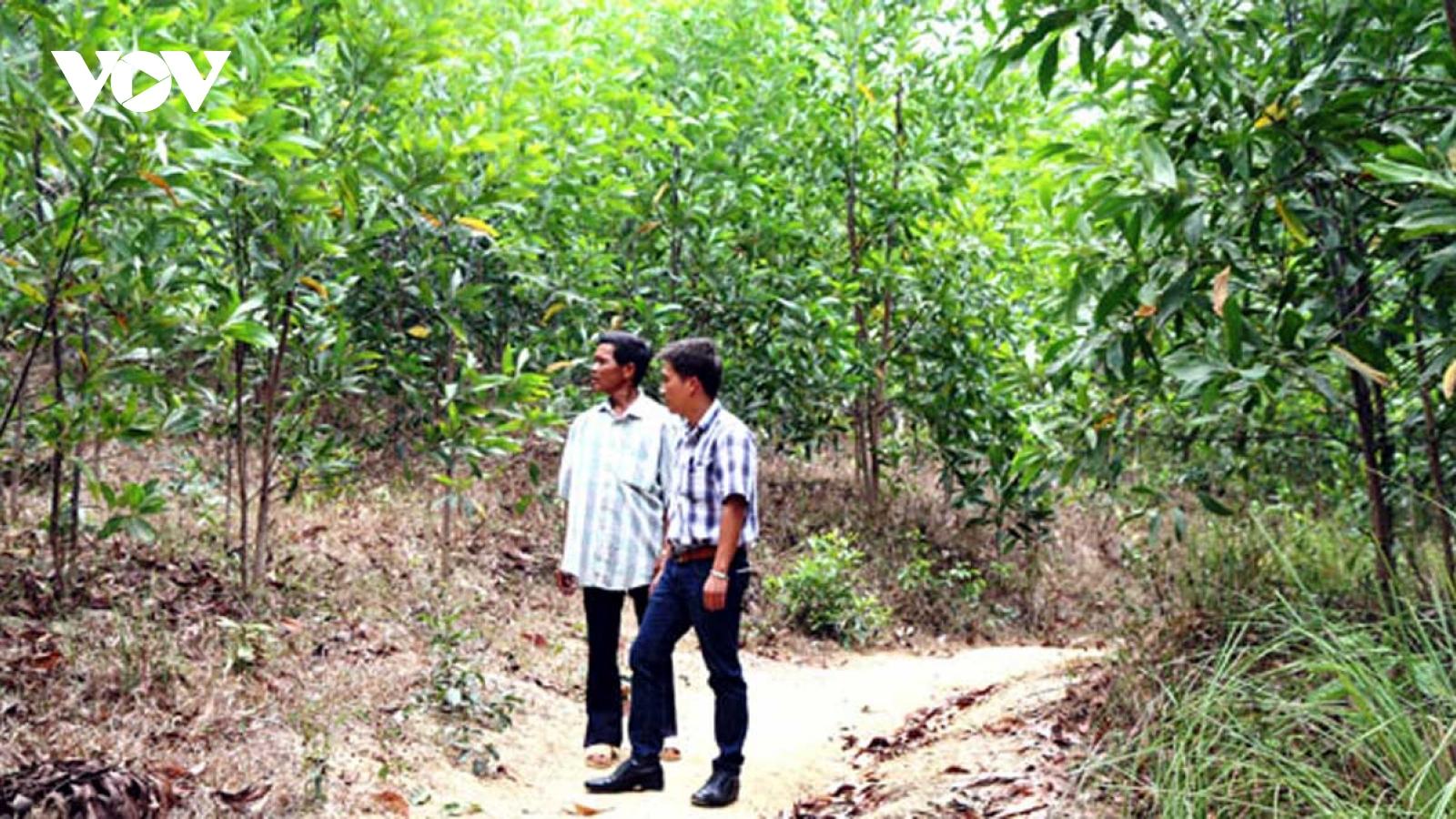 Sinh kế đồi - rừng nâng thu nhập cho người dân Đắk Lắk