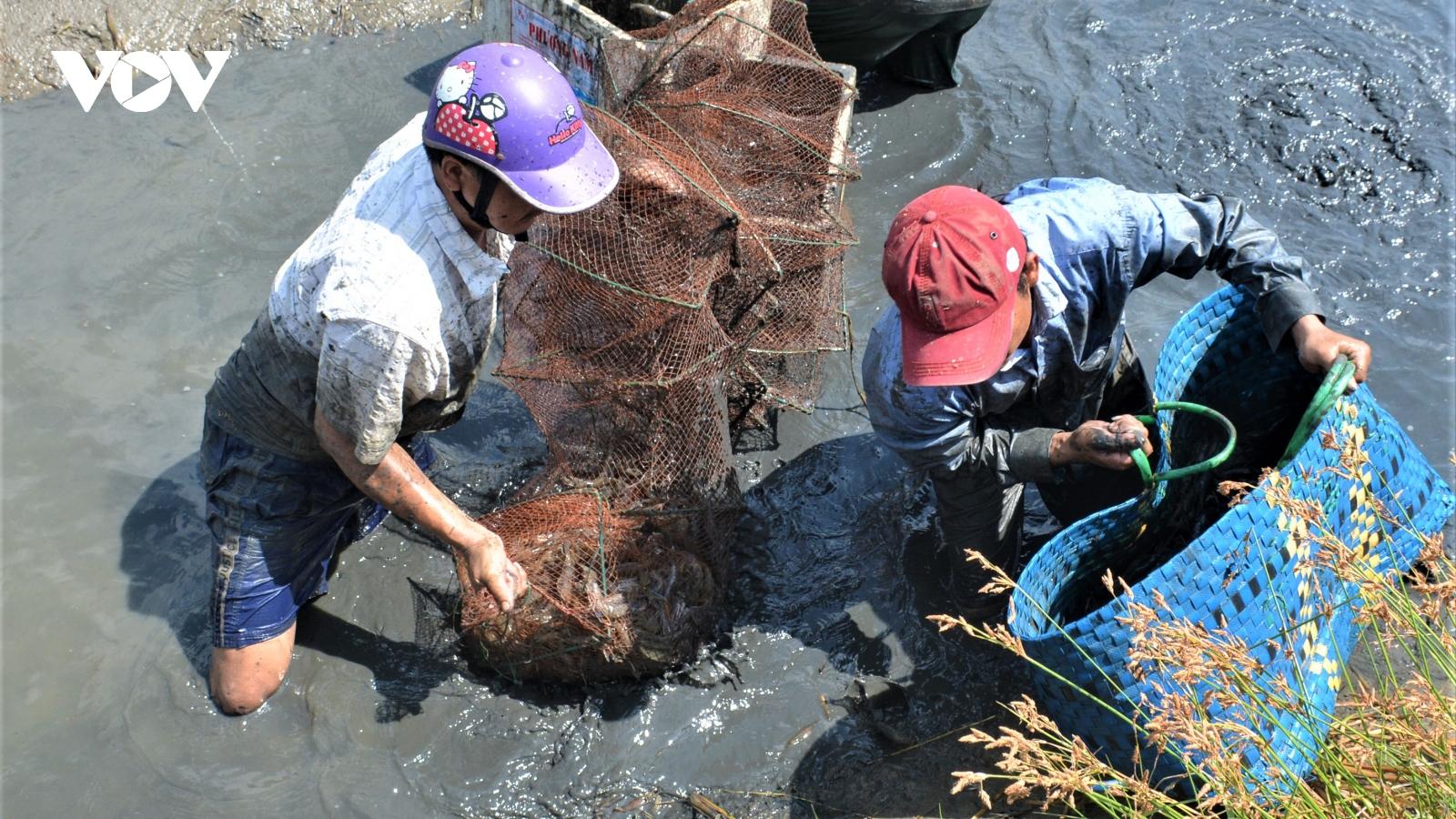 """Nghị quyết """"vàng"""" giúp đồng bằng sông Cửu Long phát triển bền vững"""
