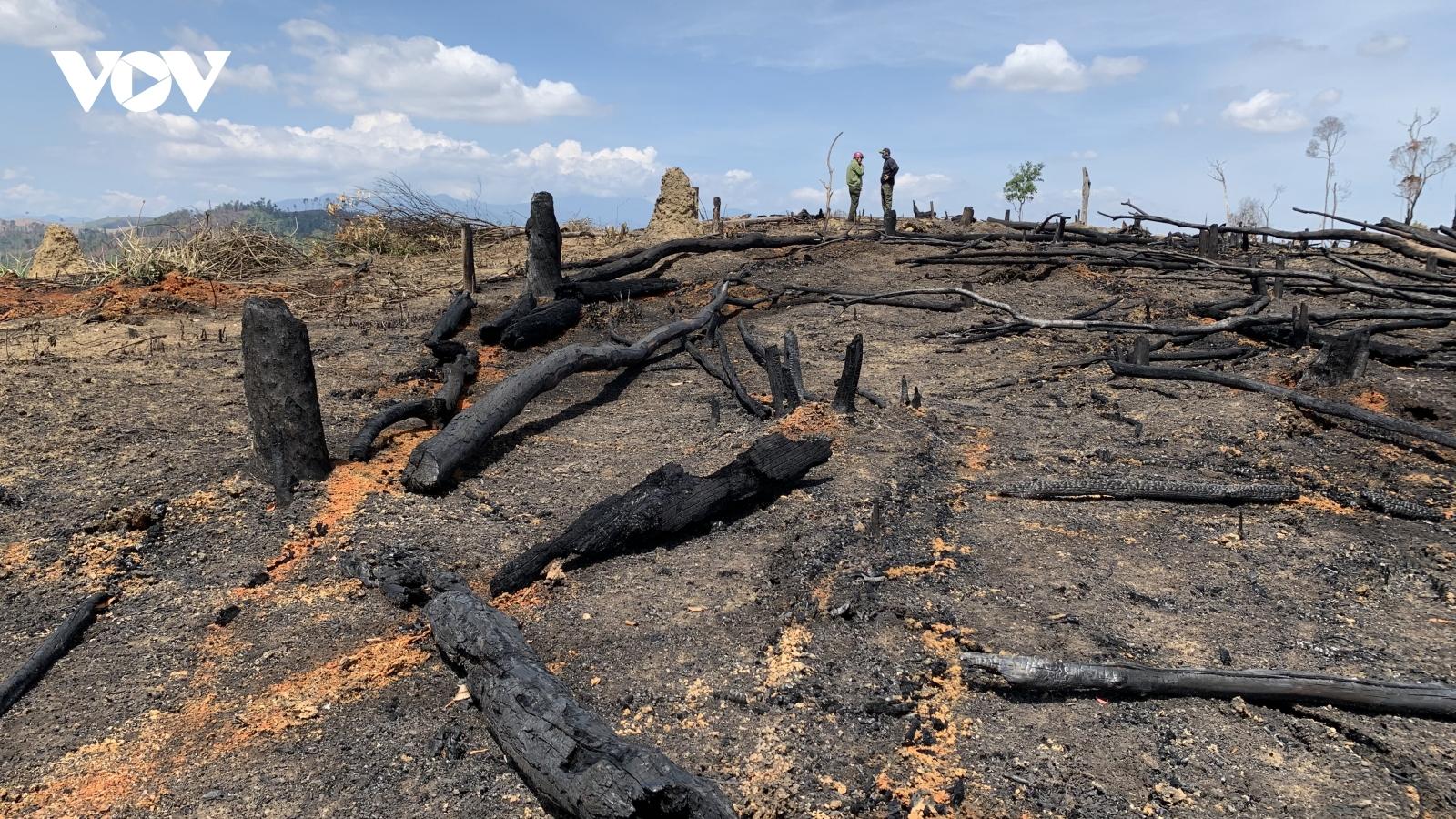 Rừng tại Đắk Lắk bị phá tràn lan trong sự bất lực của chủ rừng