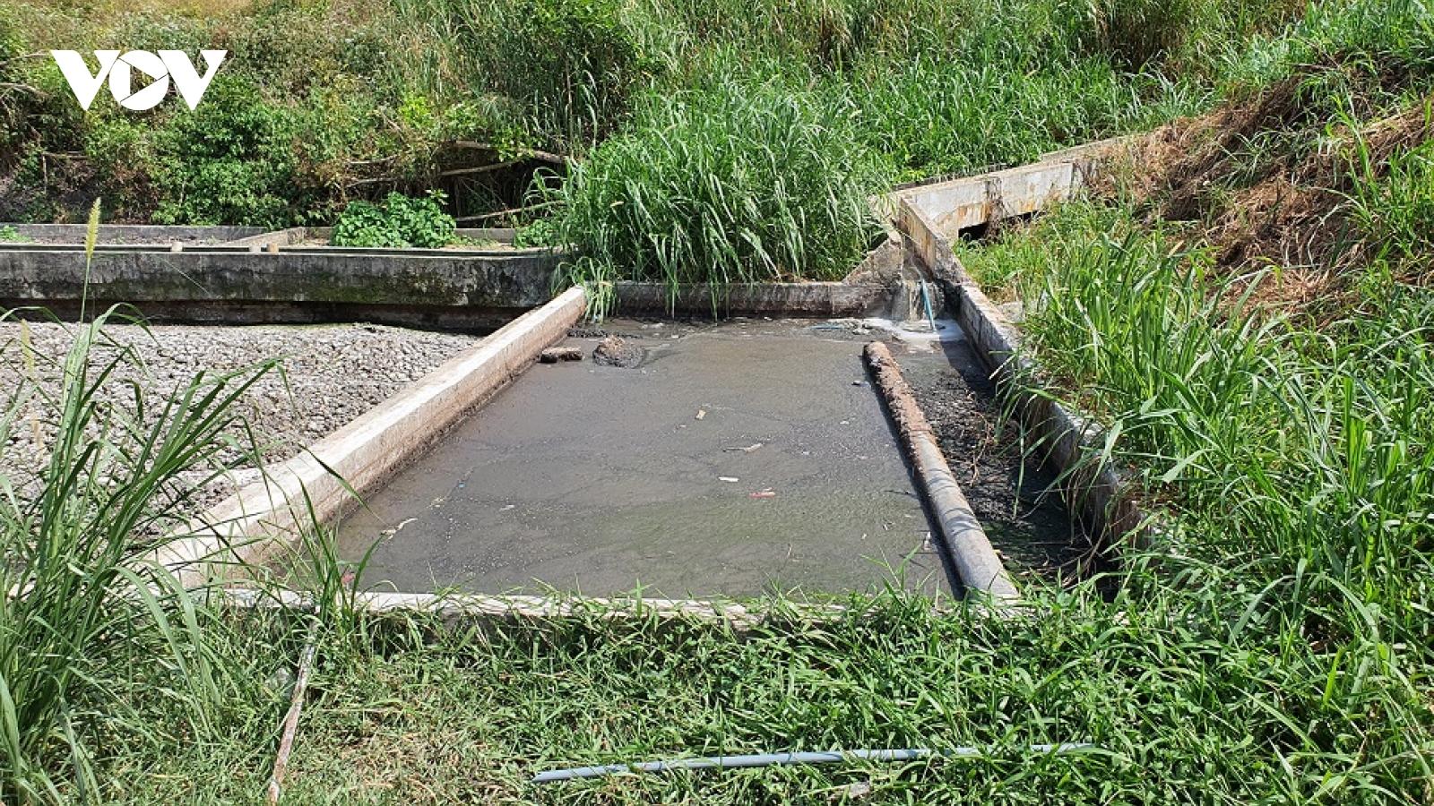 Trại nuôi heo gây ô nhiễm môi trường ở Quảng Nam, chính quyền chưa xử lý dứt điểm