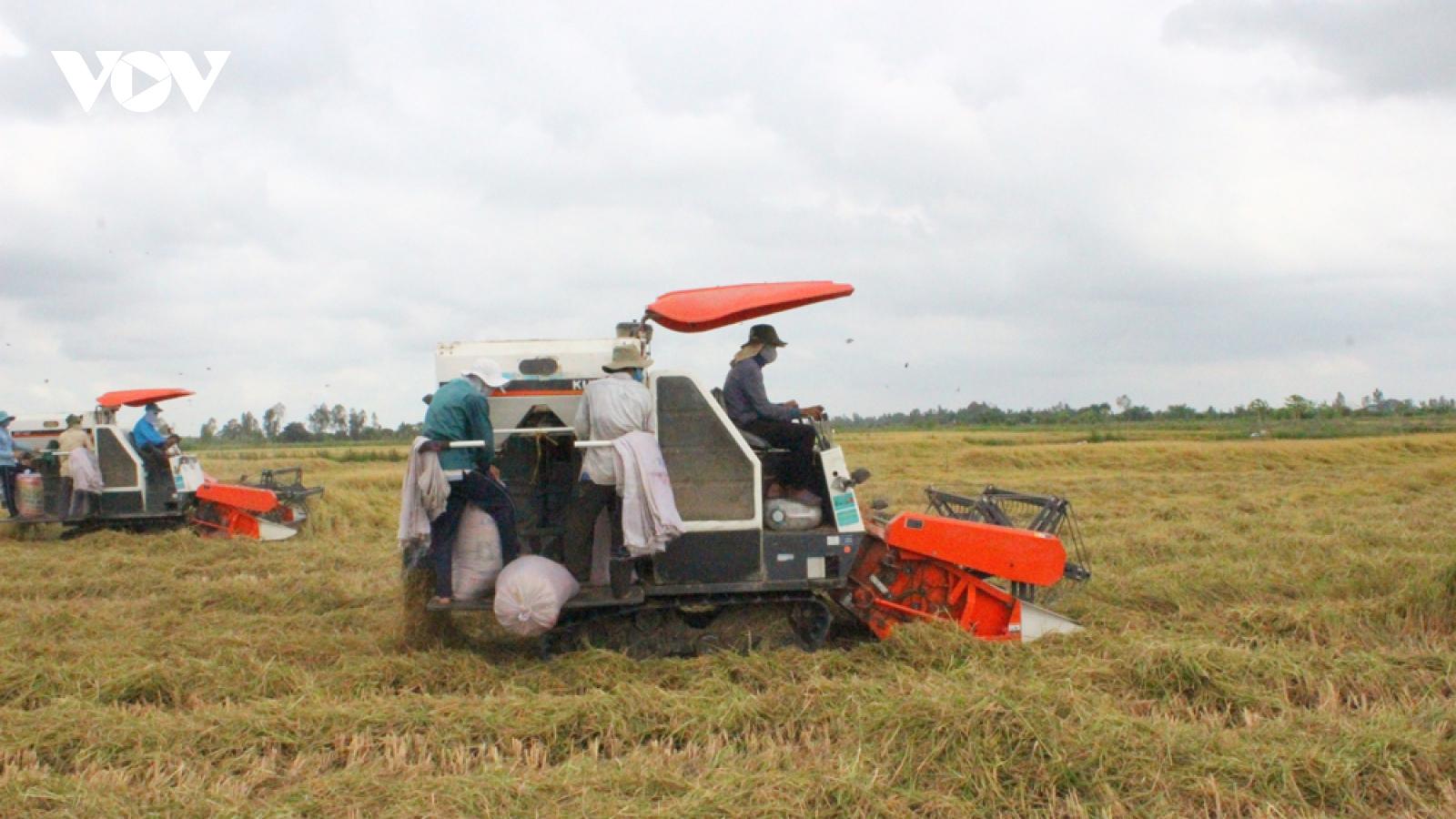 Xuất khẩu gạo giảm trong những tháng đầu năm 2021