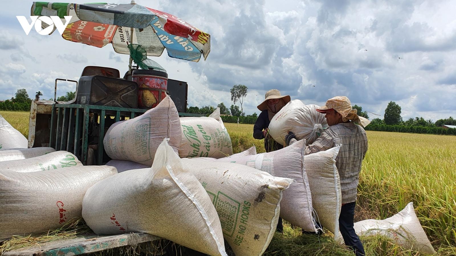 Né được hạn mặn, người dân ĐBSCL thắng lợi lớn trong vụ lúaĐông Xuân