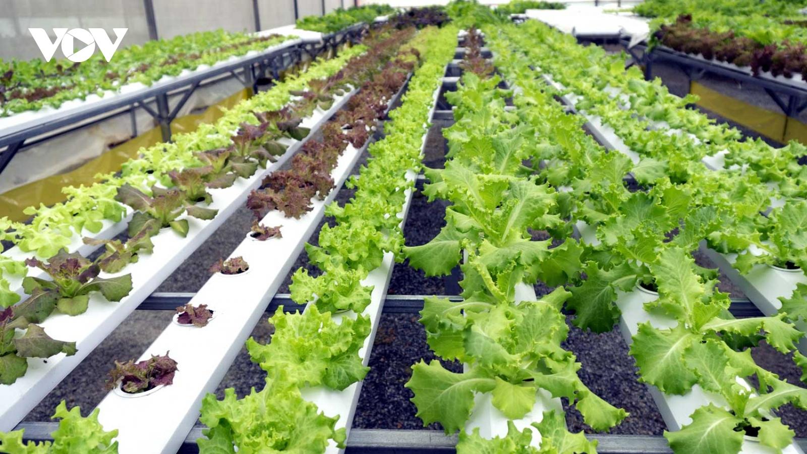 Ứng dụng công nghệ cao trong sản xuất nông nghiệp cho thu nhập ổn định