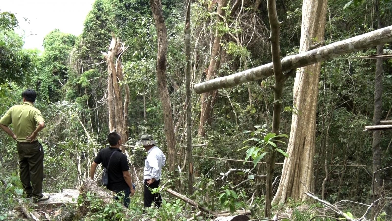 Báo động phá rừng giáp ranh ở Gia Lai: Mỗi ngày một vụ