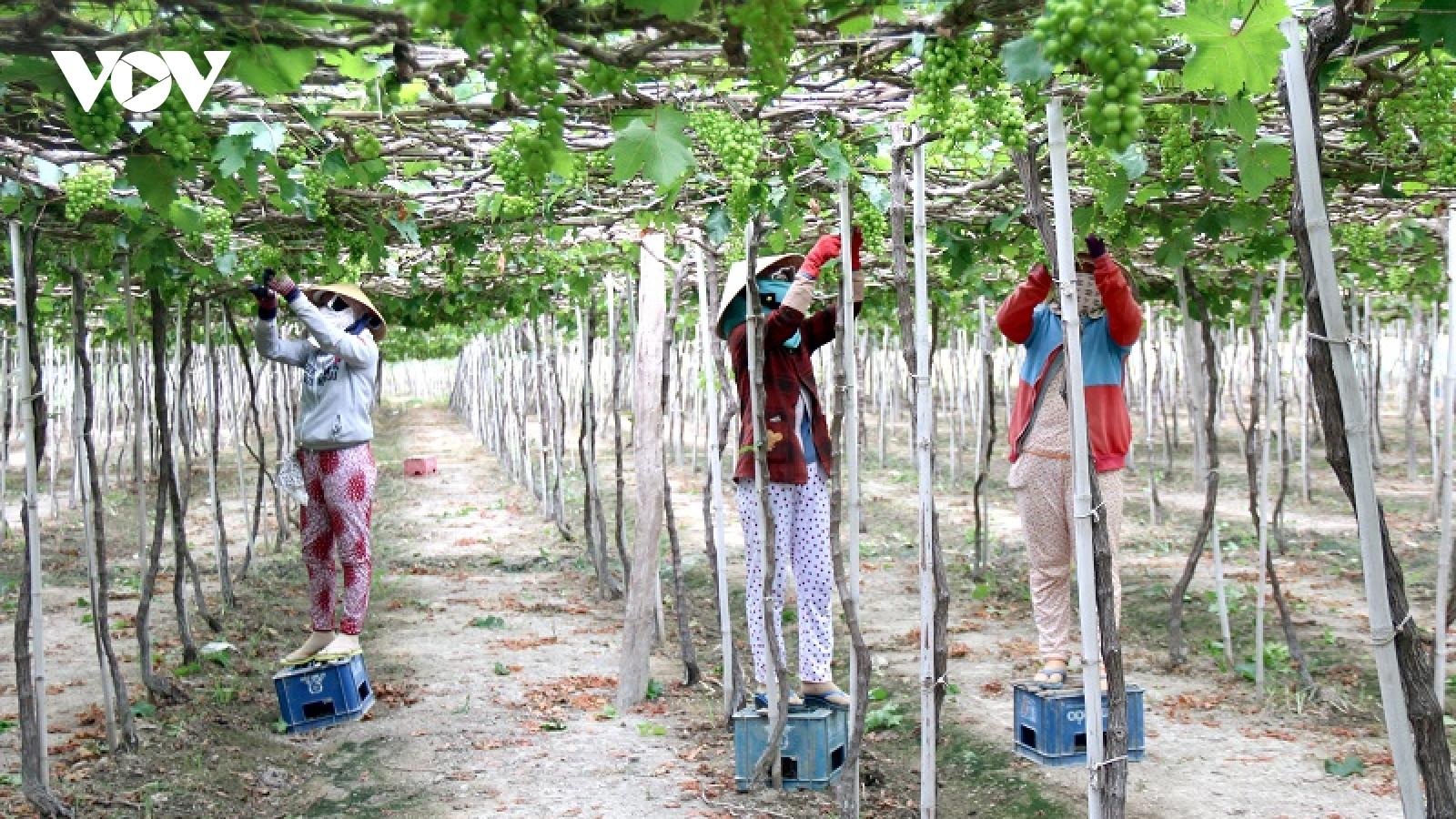 Tiềm năng du lịch nông nghiệp ở Bình Thuận chưa được khai thác đúng mức