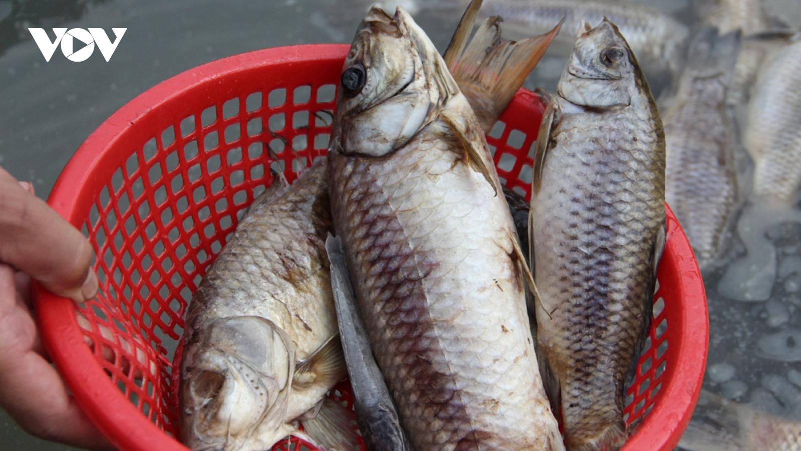 80 tấn cá chết trên sông ở Bình Dương chưa xác định được nguyên nhân