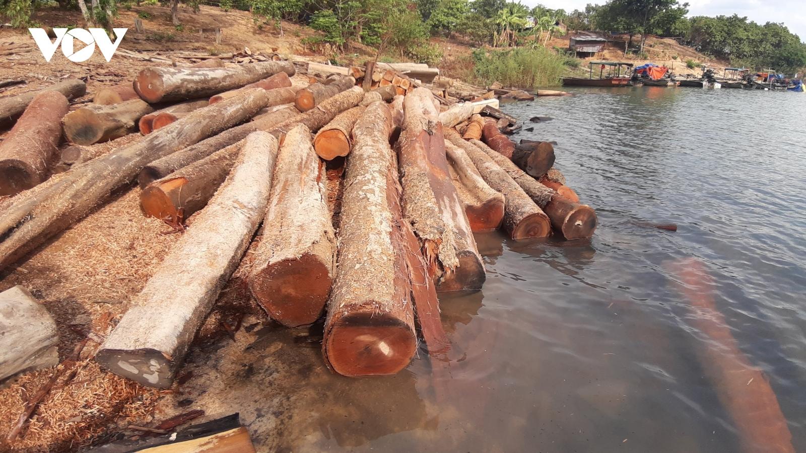 Cận cảnh kho gỗ lậu cực lớn dưới lòng hồ Thuỷ điện Sê San 4