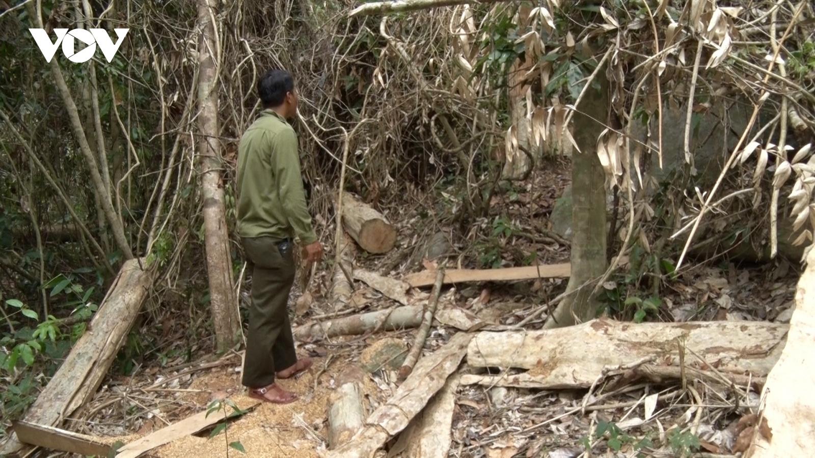 Nóng tình trạngphá rừng ở vùng quy hoạch tưới của Thuỷ lợi Ia Mơr