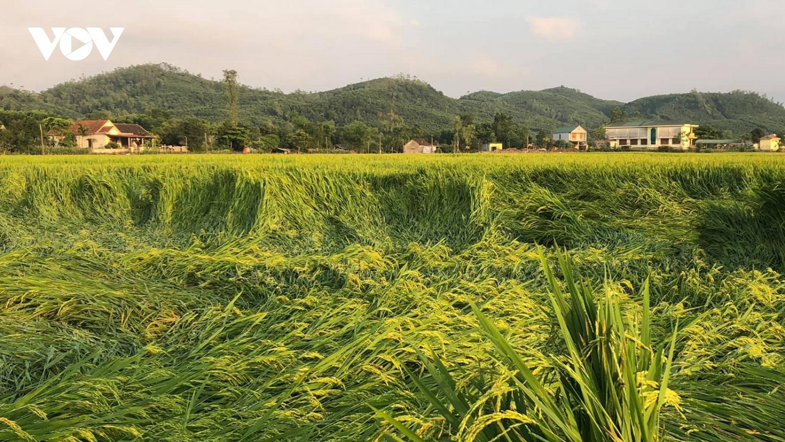Giông lốc làm thiệt hại nhiều diện tích cây nông nghiệp ởQuảng Bình