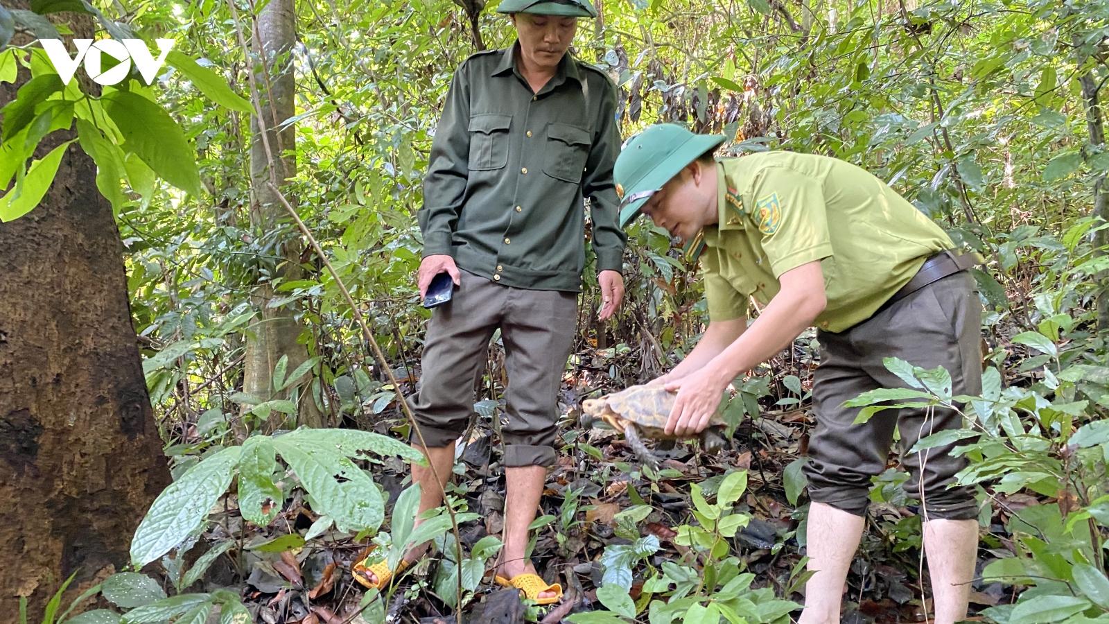 Quảng Nam thả 5 cá thể rùa quý hiếm về rừng tự nhiên